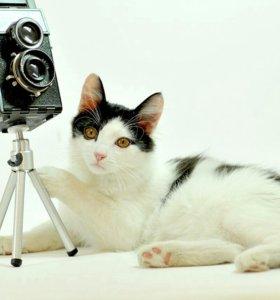 Котенок Добрыня