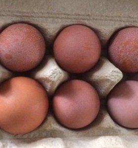 Яйцо столовое деревенское