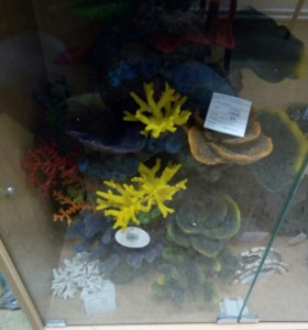 Кораллы для аквариума