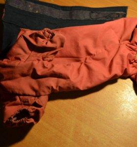 Куртка для чихуахуа тёплая