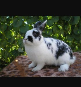 Кролики живым весом