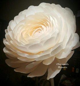 Ростовые цветы . Гиганские цветы