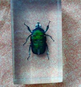 Коллекционный жук)