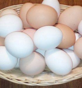 Яйцо куриное, от домашних курочек