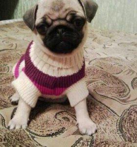 Свитер для собаки