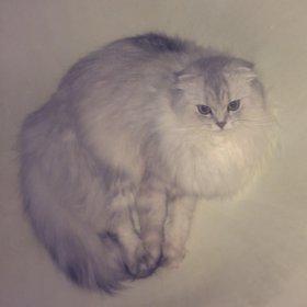 Кошка ждёт