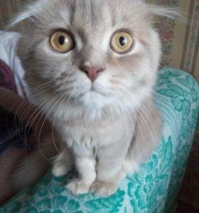 Кошечка, 5 месяцев