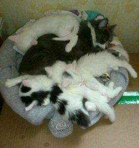 Котята ищут уютный дом