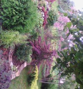 Ландшафтный дизайн. Декоративные растения.