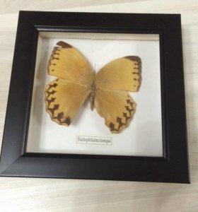 Картина бабочка