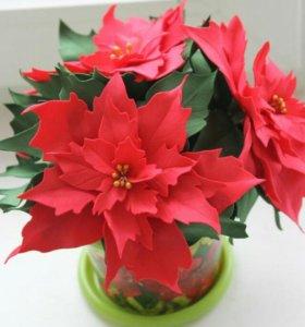 Цветок жизни пуансеттия