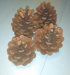 Декоративные сосновые шишки