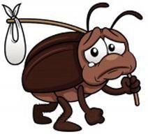 Уничтожение клопов,тараканов,блох