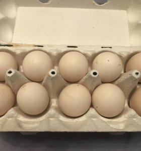 Инкубационное Яйцо-Павловских кур