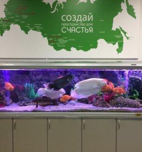 Услуги аквариума