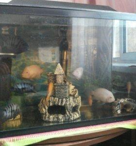 Аквариум с рыбками и с комплектующими.