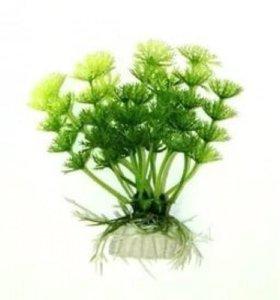 Амбулия светло-зелёная 10 см