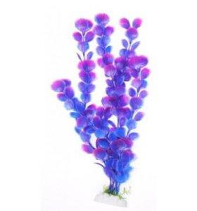 Вашингтония фиолетовая, 30 см