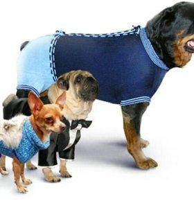 Одежда для животных в Айболите