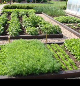 Продам сад-огород
