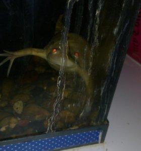 Лягушка подводная