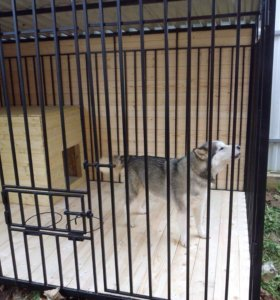 Вольер повышенной надежности для активных собак.