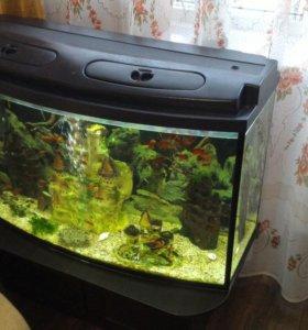 Большой аквариум 200л. с тумбой