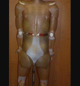 Человеческое тело -Артём