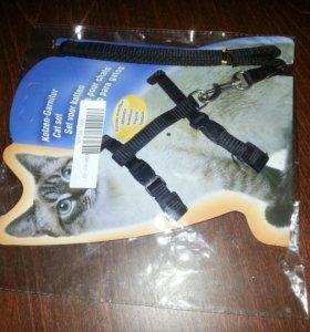 Поводок для котов. И кошек.