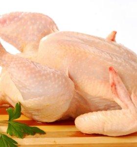 Домашние мясо курицы