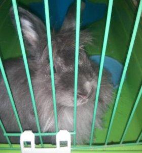 Декоративный кролик,девочка