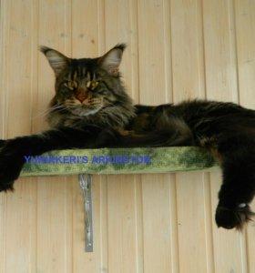 Кот Мейн Кун - вязка