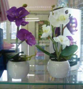Орхидеи светильник