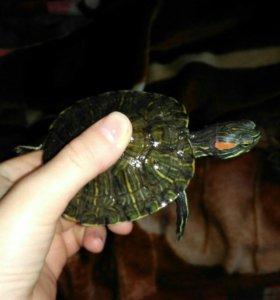 Продам черепаху с аквариумом