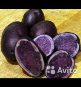 Фиолетовый картофель