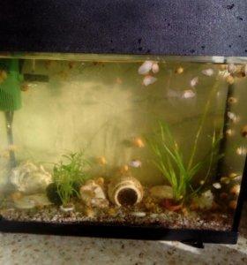 Продаю аквариум с улитками и рыбами и оборудования