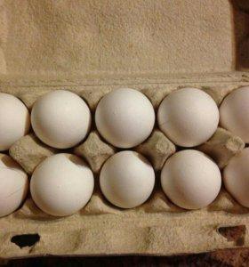 яйцо на  инкубацию и еду
