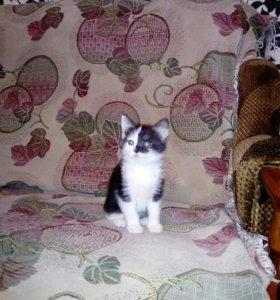 Настоящий котенок по имени ГАВ