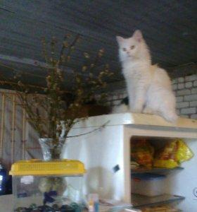 Передержка кошек и котов