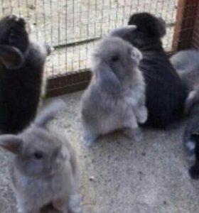 Кролики летние (дикие - домашние)