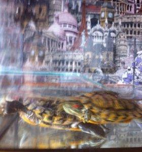 2 черепахи с аквариумом