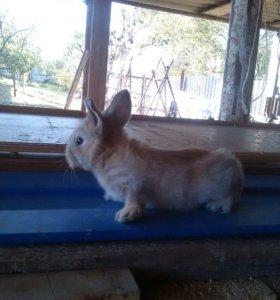 Кролики 2.5 месяса