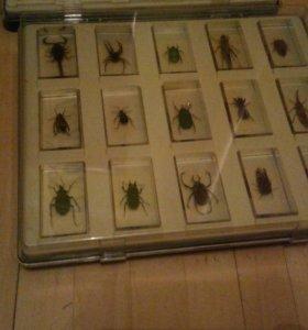 """Набор жуков """"насекомые и их знакомые Deagostini"""""""