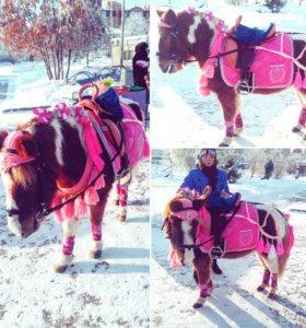 Прокат лошадей и пони
