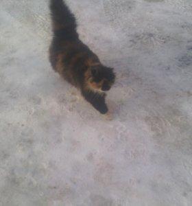 Кошка очень красивая