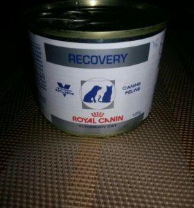 Диетический корм для собак и кошек