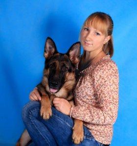 Дрессировка собак, проф хендлинг