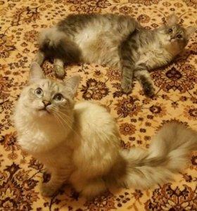 Отдадим котиков в добрые и заботливые руки!