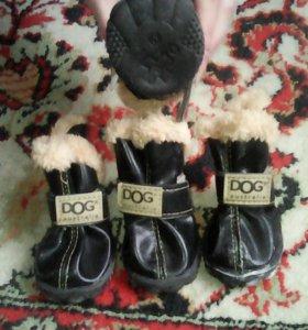 Ботинки на сабачку