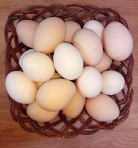 Яйцо куриное (домашнее).